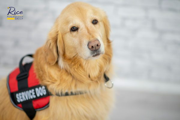 Knowing the Differences Between Service, Emotional Support, and Therapy Animals
